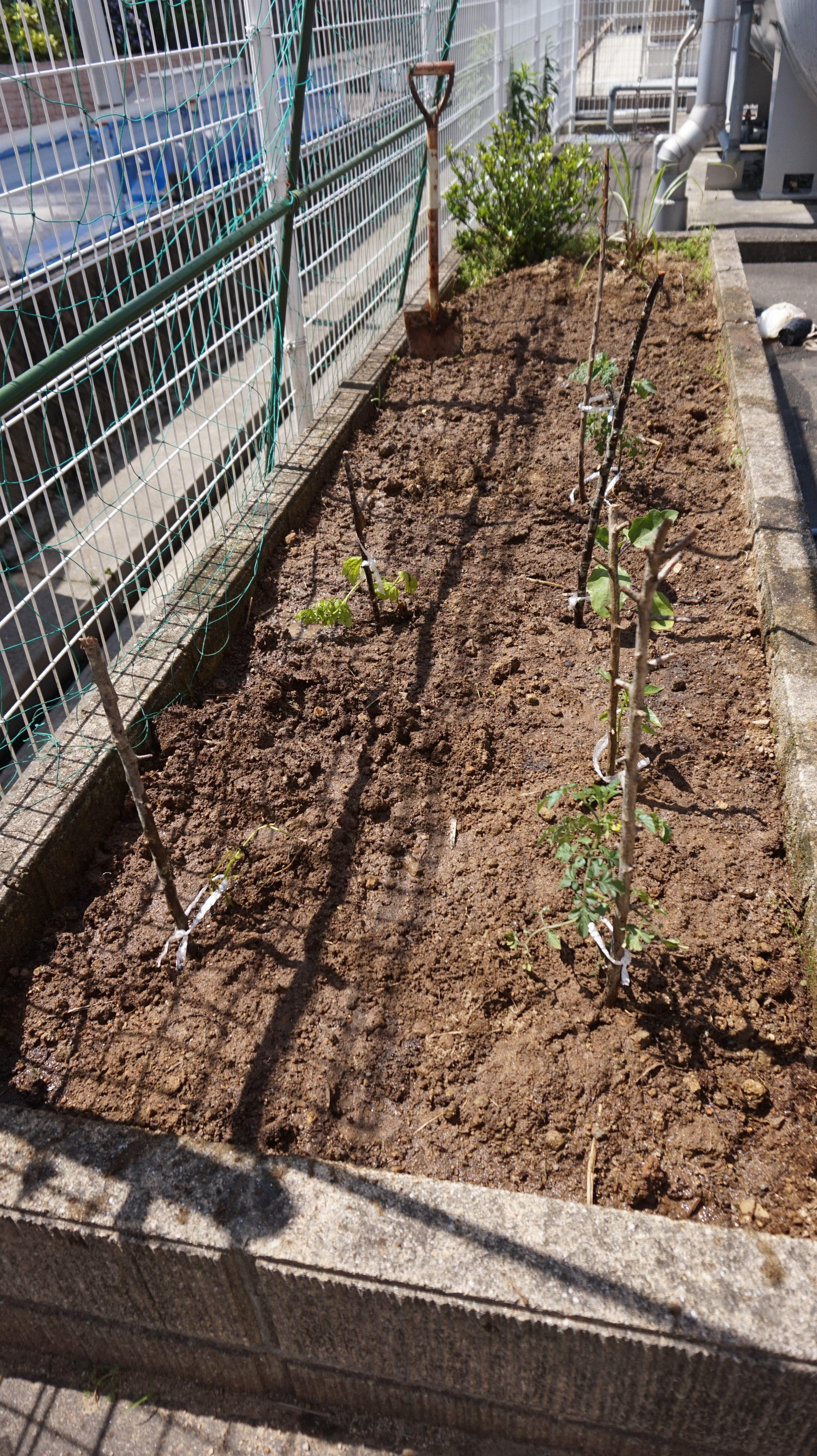 野菜苗を植えました